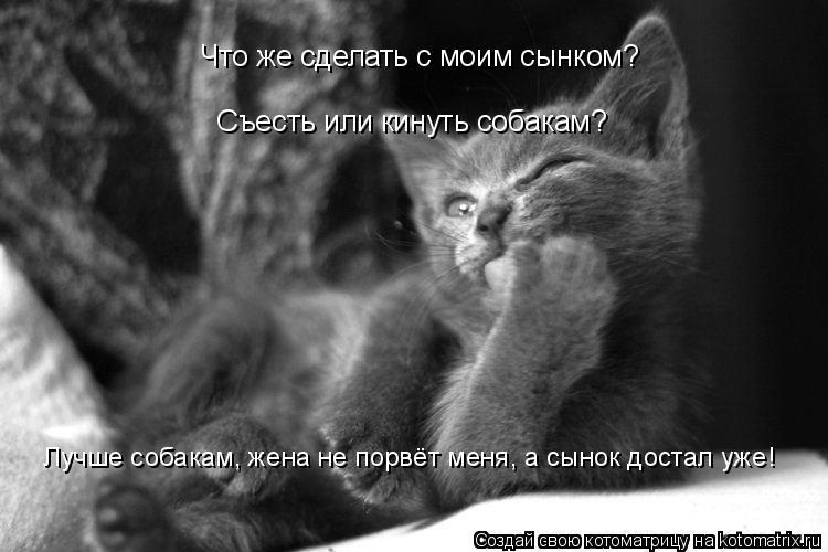 Котоматрица: Что же сделать с моим сынком? Съесть или кинуть собакам? Лучше собакам, жена не порвёт меня, а сынок достал уже!