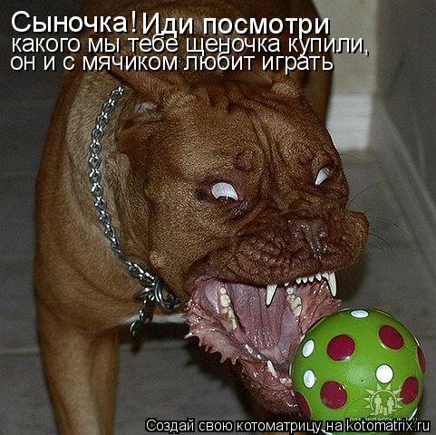 Сыночка! Иди посмотри какого мы тебе щеночка купили, он и с мячиком