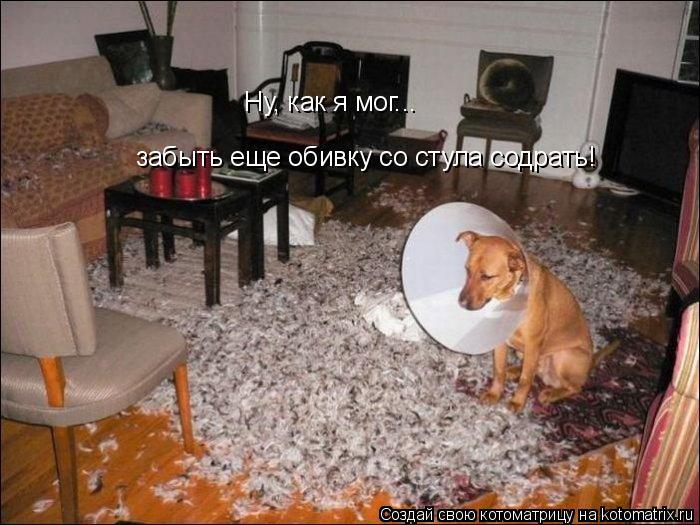 Котоматрица: Ну, как я мог... забыть еще обивку со стула содрать!