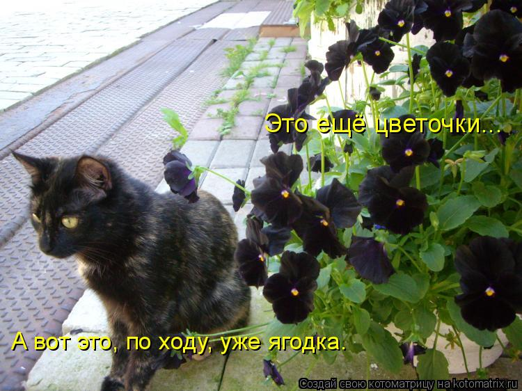 Котоматрица: Это ещё цветочки... А вот это, по ходу, уже ягодка.