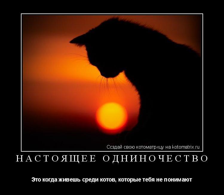Котоматрица: Настоящее одниночество Это когда живешь среди котов, которые тебя не понимают