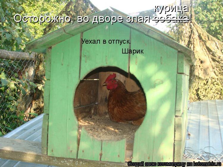 Котоматрица: Осторожно, во дворе злая собака! ______ курица Уехал в отпуск. Шарик