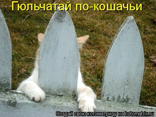 Котоматрица - Гюльчатай по-кошачьи