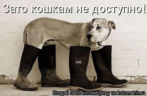 Котоматрица: Зато кошкам не доступно!