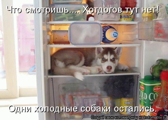 Котоматрица: Что смотришь.... Хотдогов тут нет! Одни холодные собаки остались.