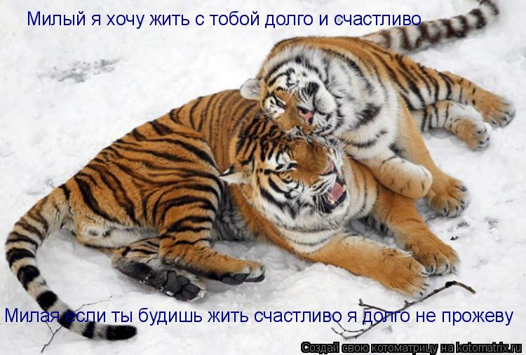Котоматрица: Милый я хочу жить с тобой долго и счастливо Милая если ты будишь жить счастливо я долго не прожеву