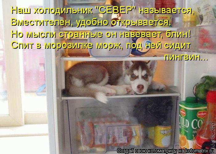 """Котоматрица: Наш холодильник """"СЕВЕР"""" называется, Вместителен, удобно открывается. Но мысли странные он навевает, блин! Спит в морозилке морж, под ней сиди"""