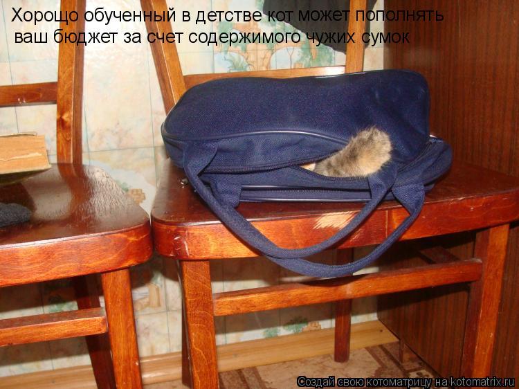 Котоматрица: Хорощо обученный в детстве кот может пополнять  ваш бюджет за счет содержимого чужих сумок