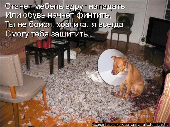 Котоматрица: Станет мебель вдруг нападать Или обувь начнет финтить, Ты не бойся, хозяйка, я всегда Смогу тебя защитить!