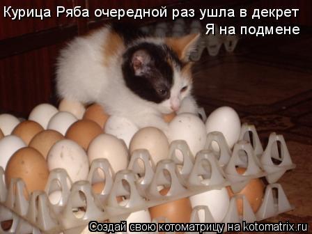Котоматрица: Курица Ряба очередной раз ушла в декрет Я на подмене