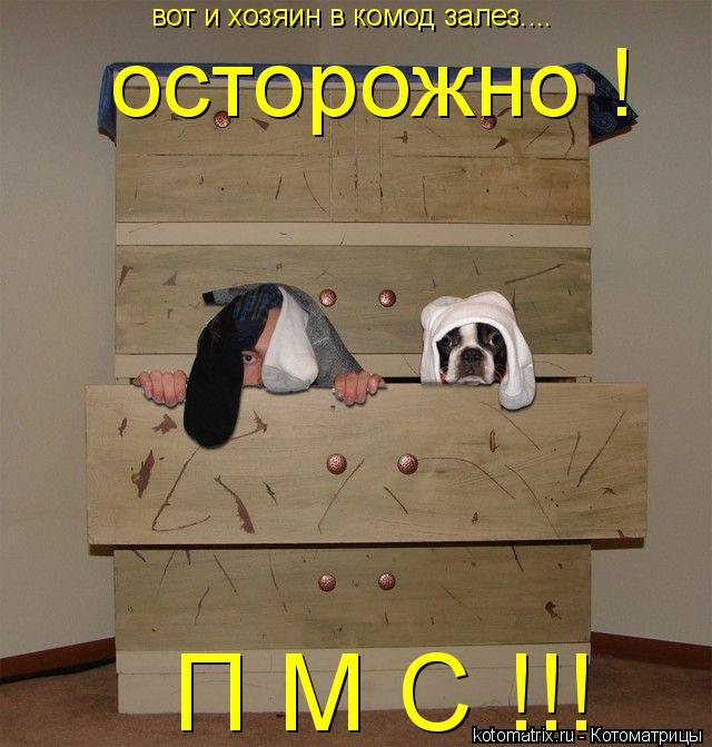 Котоматрица: вот и хозяин в комод залез.... осторожно !  П М С !!!
