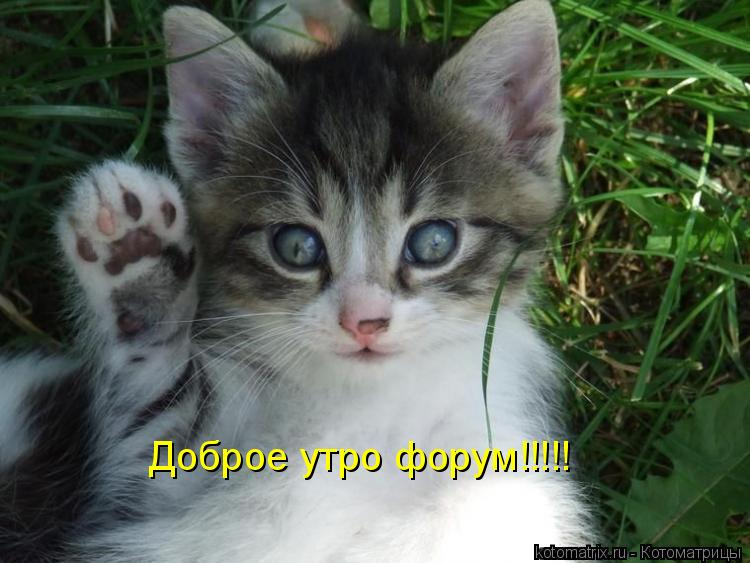 Котоматрица: Доброе утро форум!!!!!