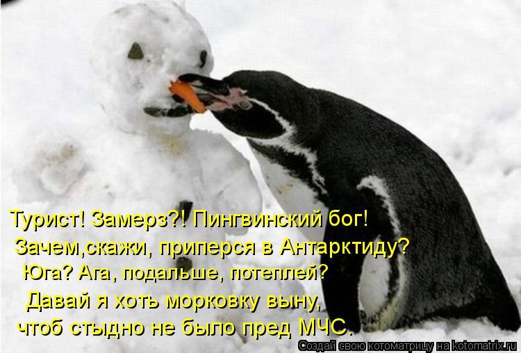 Котоматрица: Турист! Замерз?! Пингвинский бог!  Зачем,скажи, приперся в Антарктиду?  Юга? Ага, подальше, потеплей? Давай я хоть морковку выну,  чтоб стыдно н