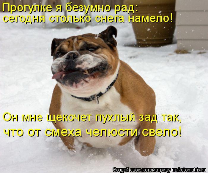 Котоматрица: Прогулке я безумно рад: сегодня столько снега намело! Он мне щекочет пухлый зад так, что от смеха челюсти свело!
