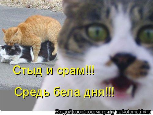 Котоматрица: Стыд и срам!!! Средь бела дня!!!