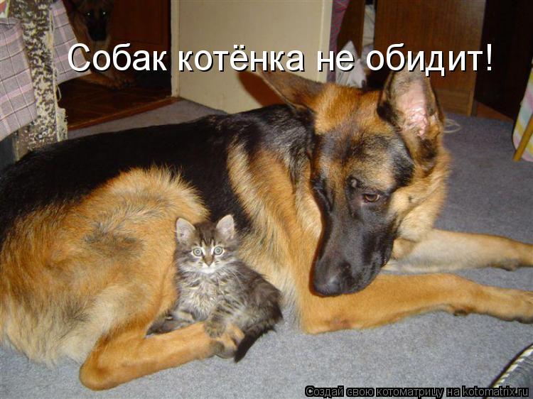 Котоматрица: Собак котёнка не обидит!