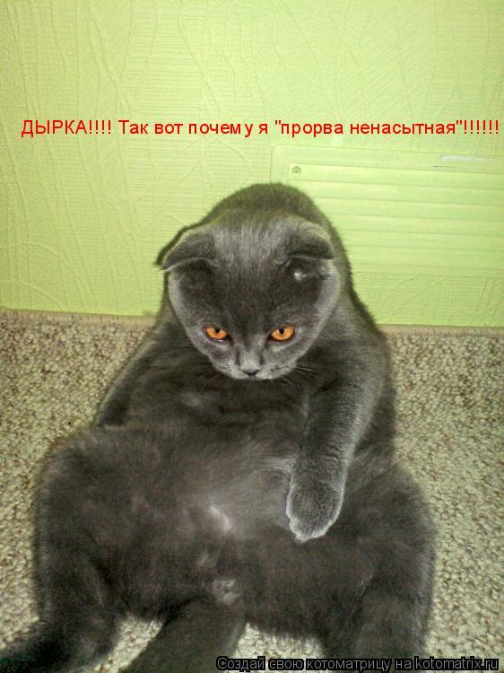 "Котоматрица: ДЫРКА!!!! Так вот почему я ""прорва ненасытная""!!!!!!"
