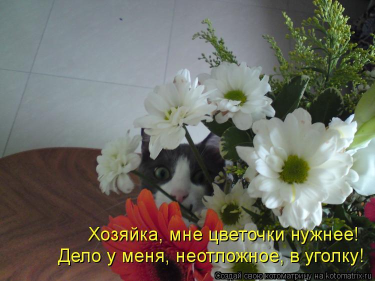 Котоматрица: Хозяйка, мне цветочки нужнее! Дело у меня, неотложное, в уголку!