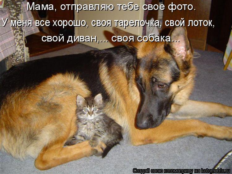 Котоматрица: Мама, отправляю тебе свое фото.  У меня все хорошо, своя тарелочка, свой лоток, свой диван,... своя собака...