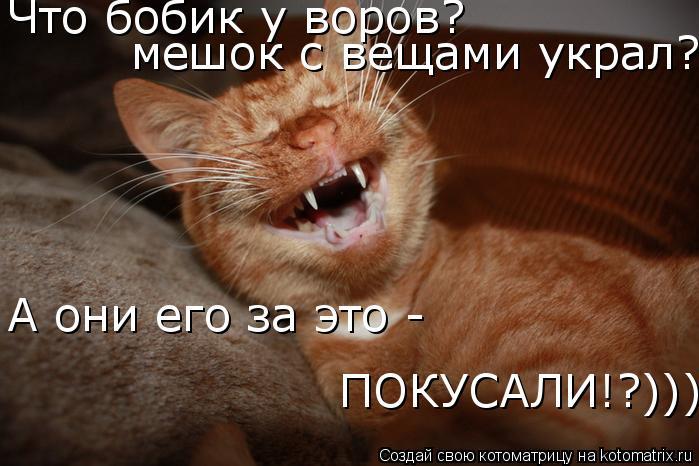 Котоматрица: Что бобик у воров? А они его за это -  ПОКУСАЛИ!?)))) мешок с вещами украл?