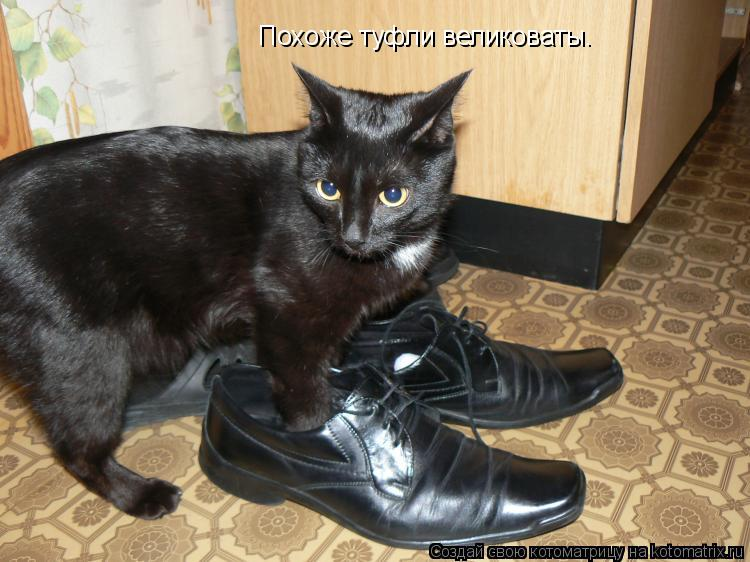 Котоматрица: Похоже туфли великоваты.