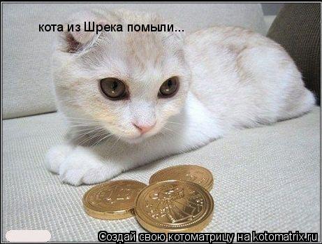 Котоматрица: кота из Шрека помыли...
