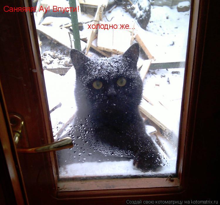 Котоматрица: Саняяяя! Ау! Впусти! холодно же...