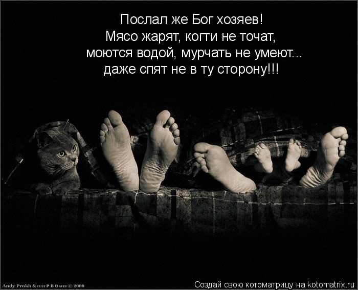 Котоматрица: Послал же Бог хозяев! Мясо жарят, когти не точат,  моются водой, мурчать не умеют... даже спят не в ту сторону!!!