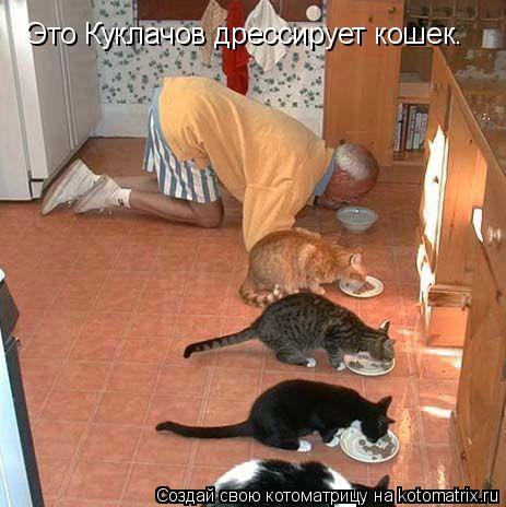 Котоматрица: Это Куклачов дрессирует кошек.