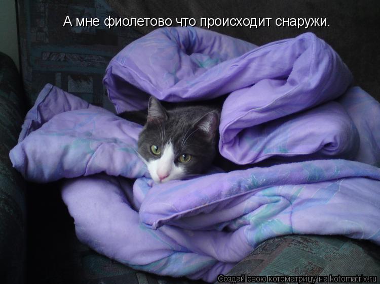 Котоматрица: А мне фиолетово что происходит снаружи.
