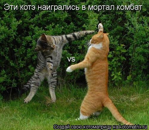 Котоматрица: Эти котэ наигрались в мортал комбат vs
