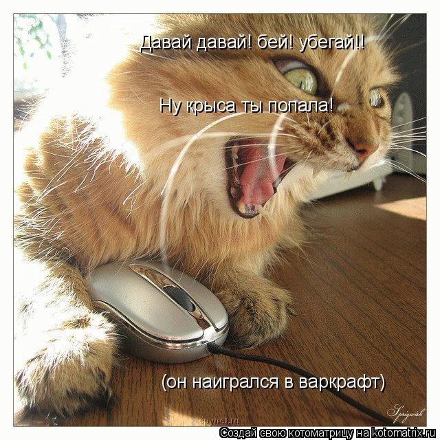 Котоматрица: Давай давай! бей! убегай!! (он наигрался в варкрафт) Ну крыса ты попала!