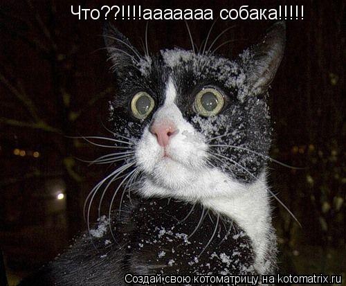 Котоматрица: Что??!!!!ааааааа собака!!!!!