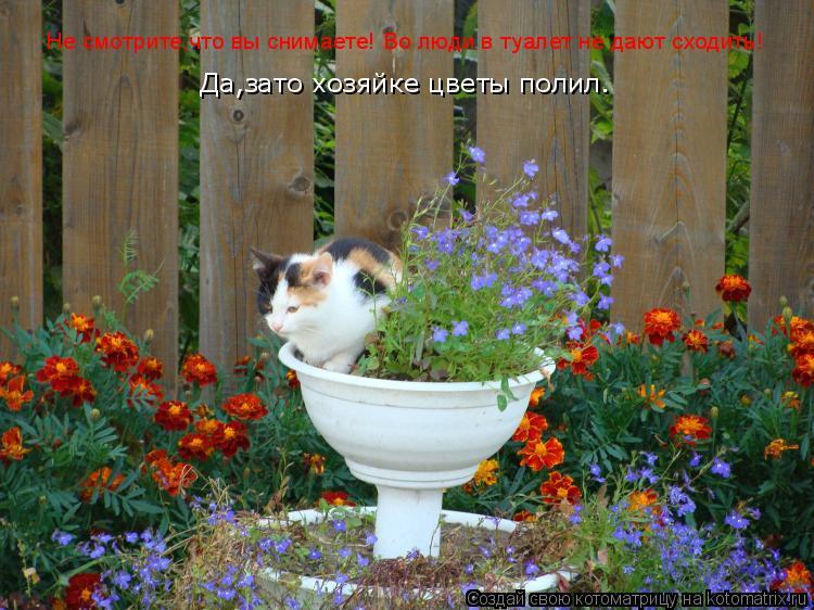 Котоматрица: Не смотрите,что вы снимаете! Во люди в туалет не дают сходить!   Да,зато хозяйке цветы полил.