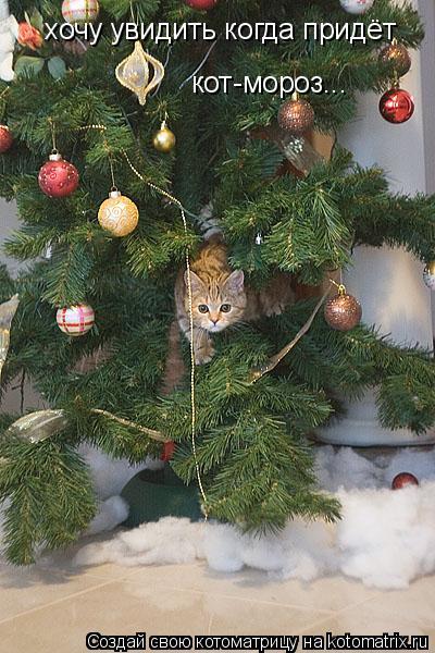 Котоматрица: хочу увидить когда придёт  кот-мороз...