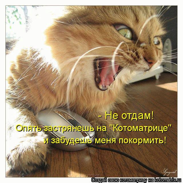 """Котоматрица: - Не отдам! Опять застрянешь на """"Котоматрице"""" и забудешь меня покормить!"""