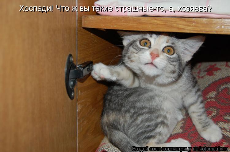 Котоматрица: Хоспади! Что ж вы такие страшные-то, а, хозяева?