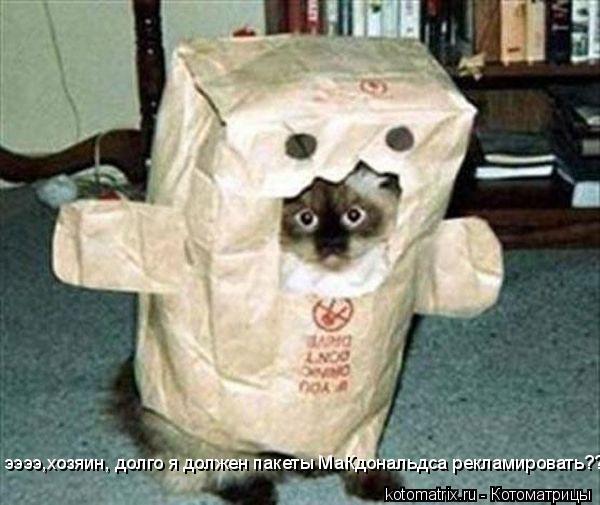 Котоматрица: ээээ,хозяин, долго я должен пакеты МаКдональдса рекламировать??