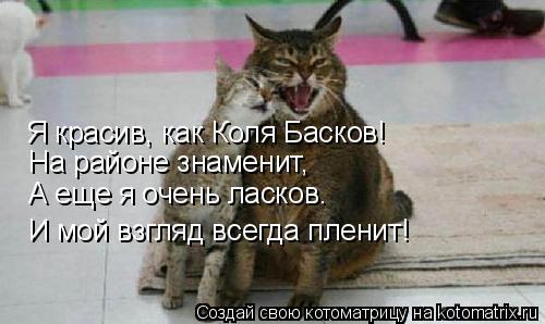 Котоматрица: Я красив, как Коля Басков! И мой взгляд всегда пленит! А еще я очень ласков. На районе знаменит,