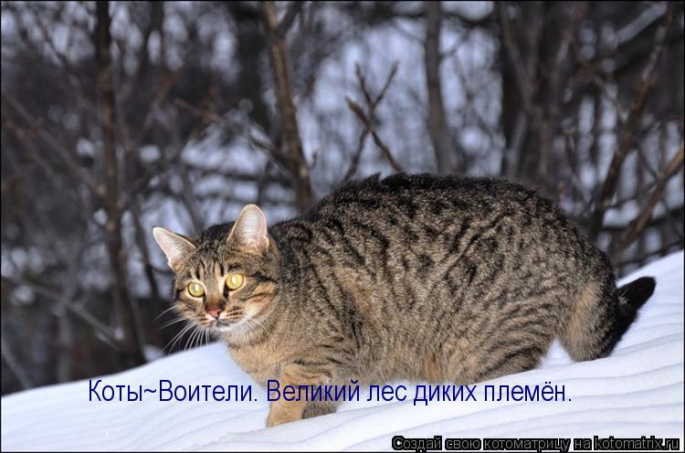 Котоматрица: Коты~Воители. Великий лес диких племён.