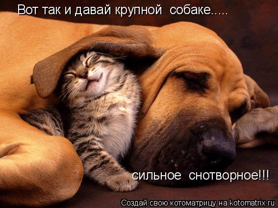 Котоматрица: Вот так и давай крупной  собаке.....  сильное  снотворное!!!
