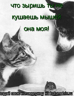 Котоматрица: что зыришь ты не кушаешь мышей она моя!