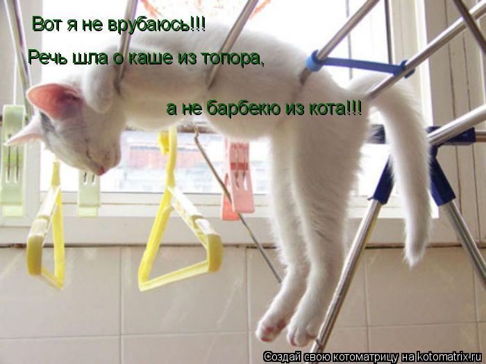 Котоматрица: Вот я не врубаюсь!!! Речь шла о каше из топора, а не барбекю из кота!!!