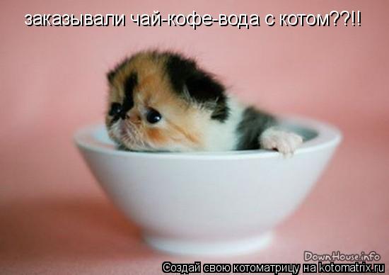 Котоматрица: заказывали чай-кофе-вода с котом??!!