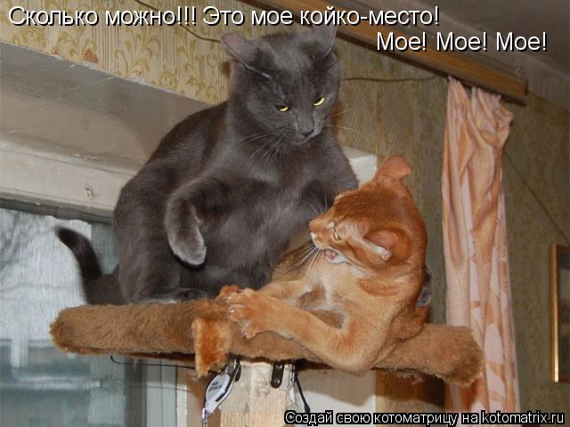Котоматрица: Сколько можно!!! Это мое койко-место! Мое! Мое! Мое!