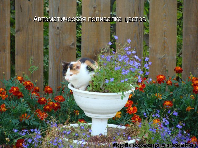 Котоматрица: Автоматическая поливалка цветов