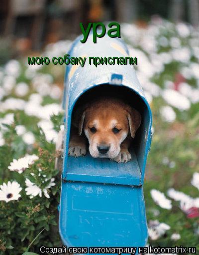 Котоматрица: ура мою собаку прислали