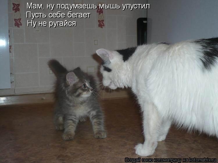 Котоматрица: Мам, ну подумаешь мышь упустил Пусть себе бегает  Ну не ругайся