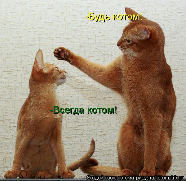 Котоматрица: -Будь котом! -Всегда котом!