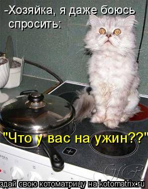 """Котоматрица: -Хозяйка, я даже боюсь спросить: """"Что у вас на ужин??"""""""